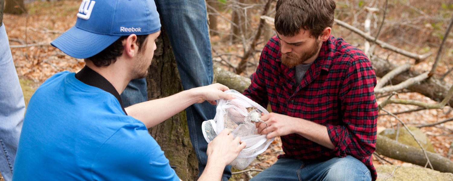 trapping specimens in the woods