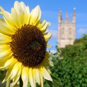 Open sunflower and the spires of Oxford