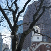 Boston Tree