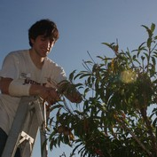 Spencer Lord pruning citrus (2009 trip)